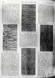 Issue No. 84 - Published October 25, 1890 10